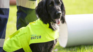 Photo of Sydney Water enlists leak detection dogs